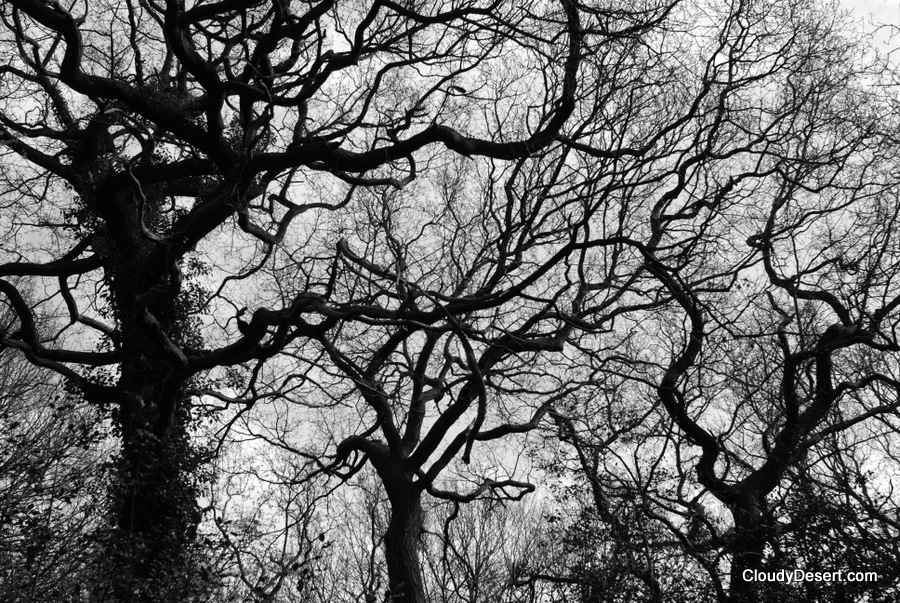 Twisted bare branches.